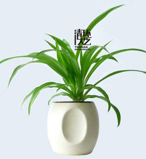植物风水:客厅与厨房放什么绿植比较好?
