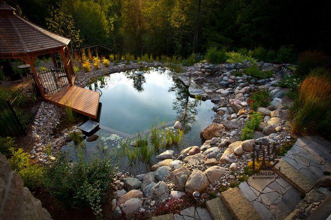 天然游泳池:更多的美丽,没有化学物质