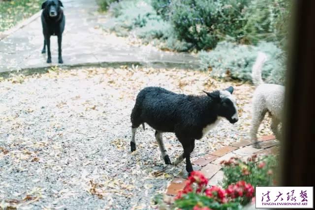 宁静而悠然的农场生活,缘于13年前的那次偶然相遇