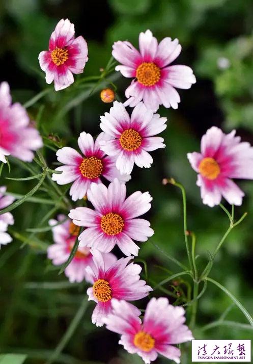 来年想看花园春色?秋播不能错过的那些花草