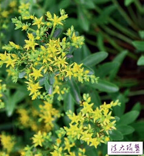 适合在花园里种的11种花草