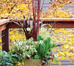 秋季盆栽组合的建议