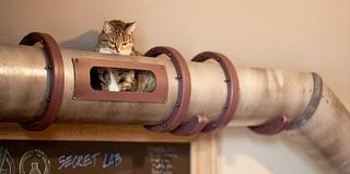 铲屎官给爱猫设计的创意室内隧道,还带观景台!