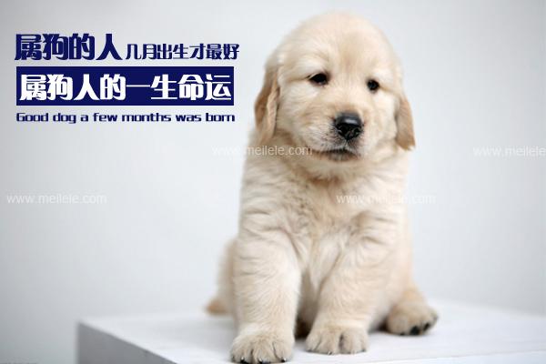 属狗的几月出生最好 属狗人的一生命运
