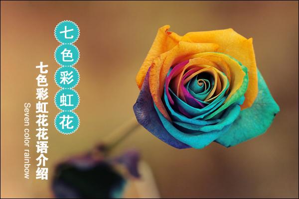 曼陀罗花有什么成效 ?芦荟的成效与效果 ?蓝色妖姬多少钱一朵?图片