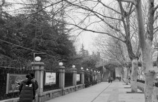 碧沙岗公园