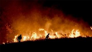 澳大利亚多家设计机构发起援助组织,为林火灾民提供无偿设计服务(图)